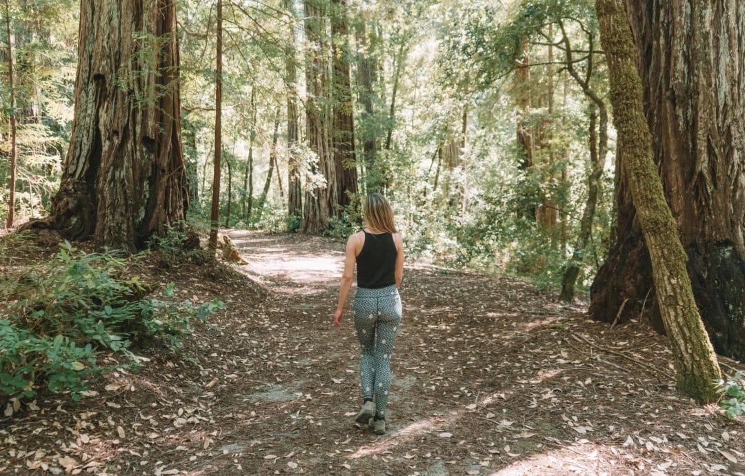 Big Basin Redwoods State Park - California's oldest state park