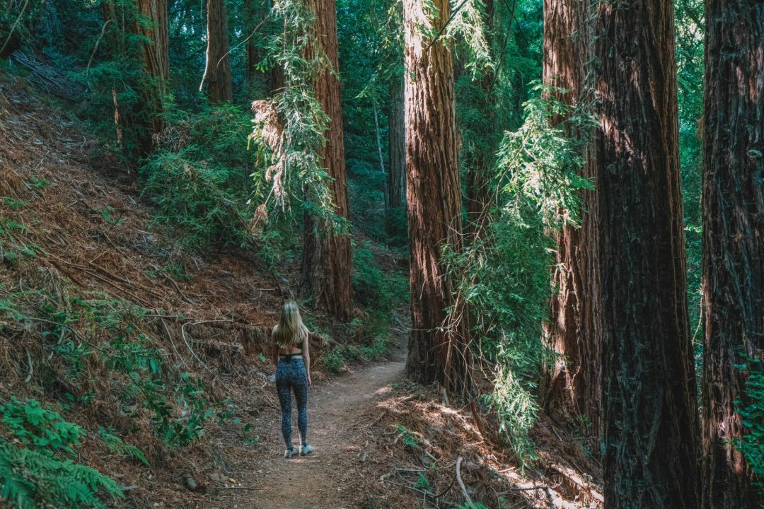 what to pack for the redwoods