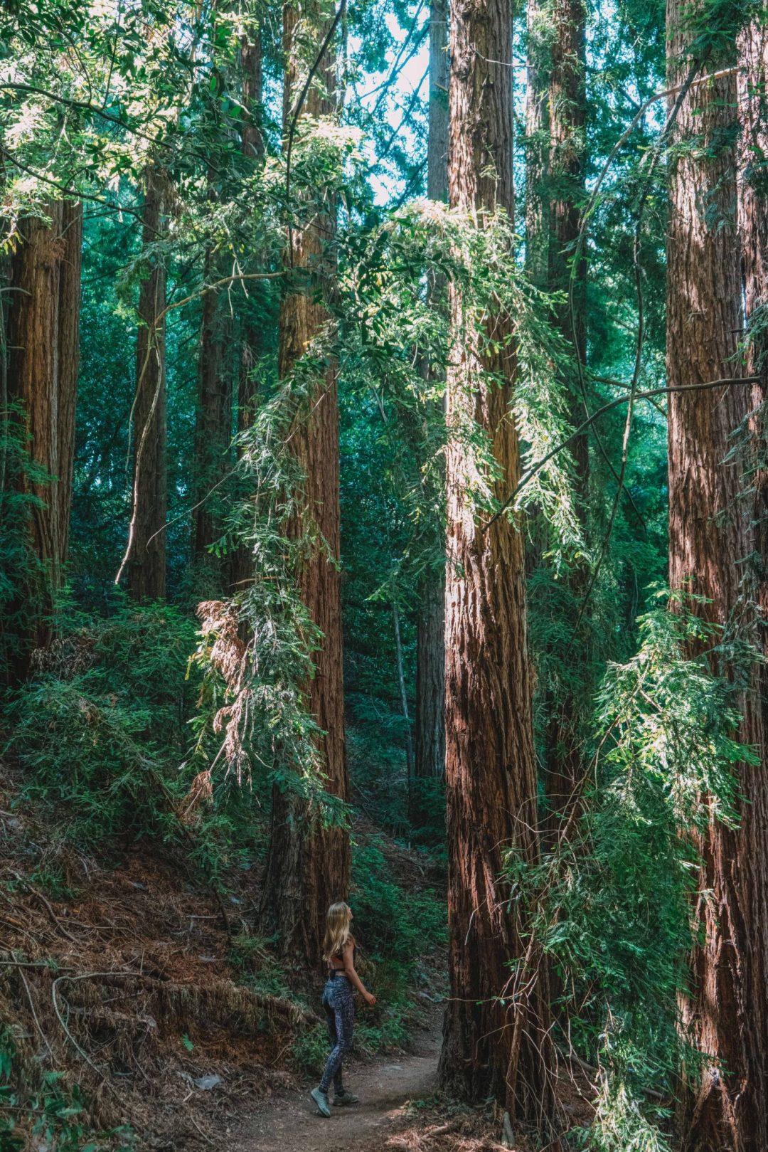 oakland redwoods - redwood regional park