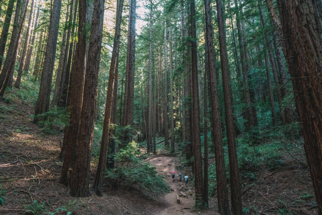 redwood regional park - east of san francisco