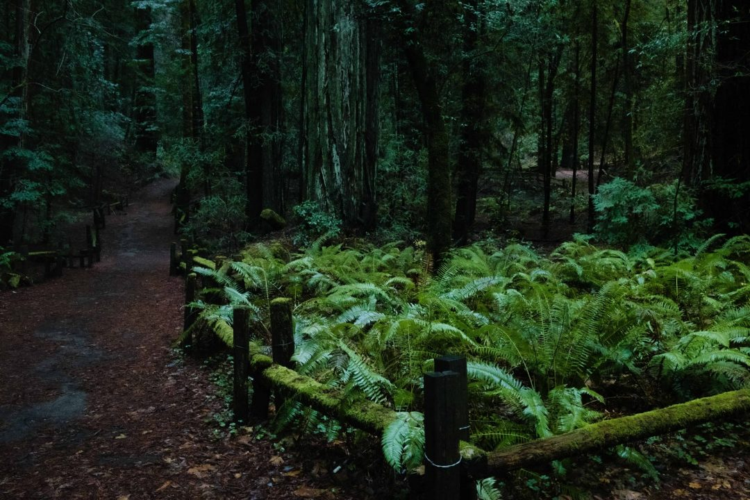 armstrong redwoods state park - best redwoods near san francisco