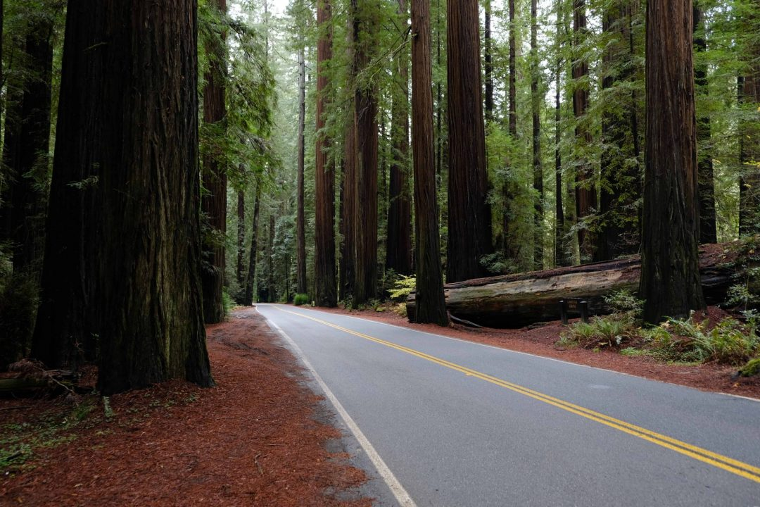 avenue of the giants in humboldt redwoods state park - best redwoods in california