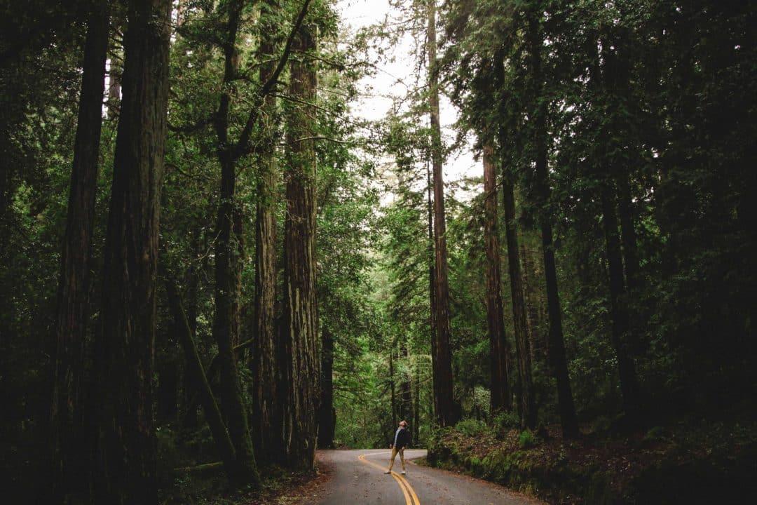 big basin redwoods state park - redwood park near san francisco