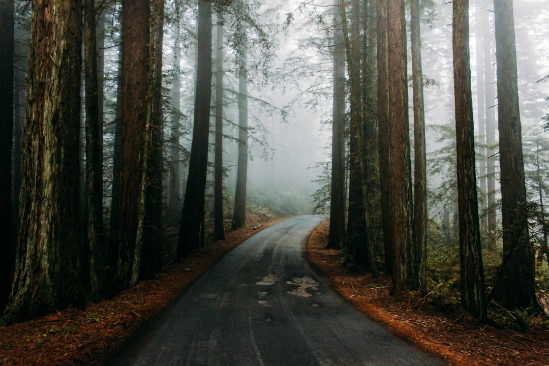 what is the best time of the year to visit the redwood forest