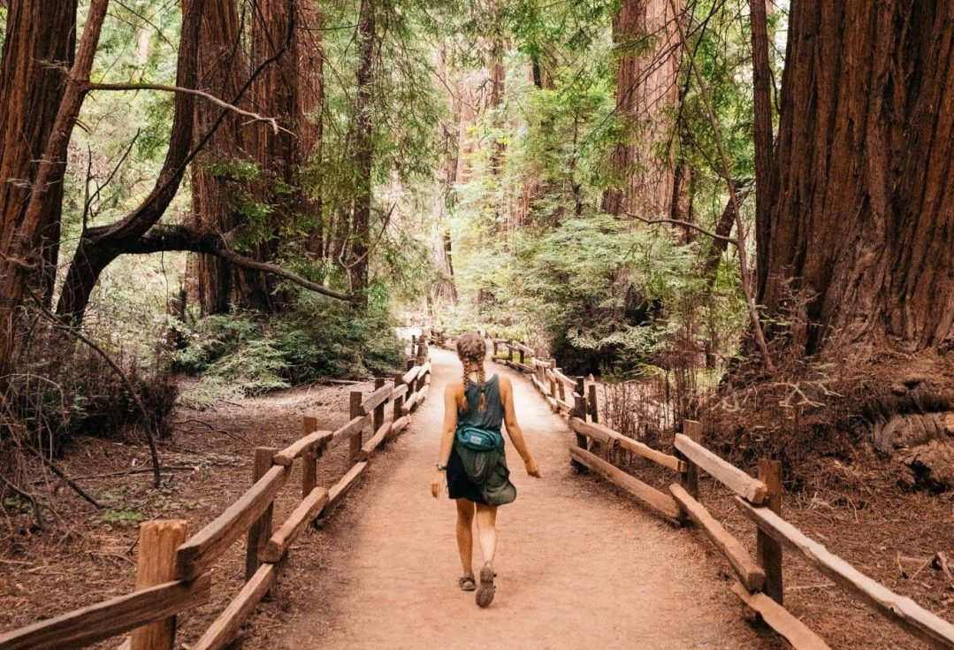 Muir Woods Hikes