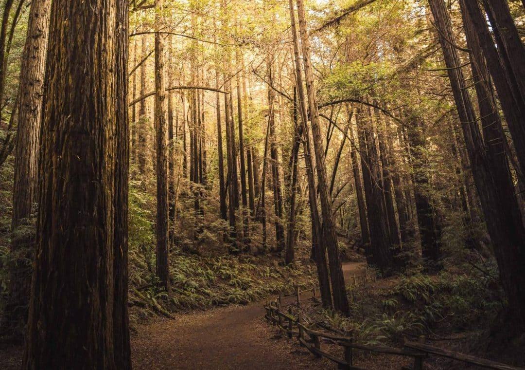redwood regional park - closest redwoods to san francisco