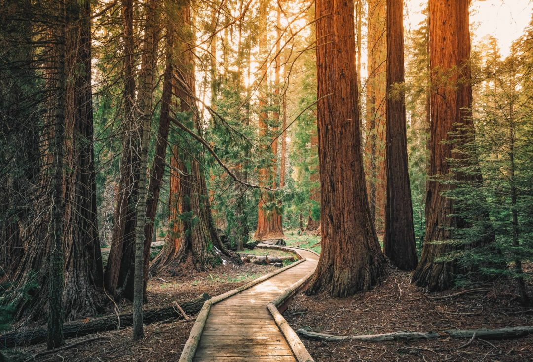 best getaways from san francisco - sequoia national park and kings canyon national park