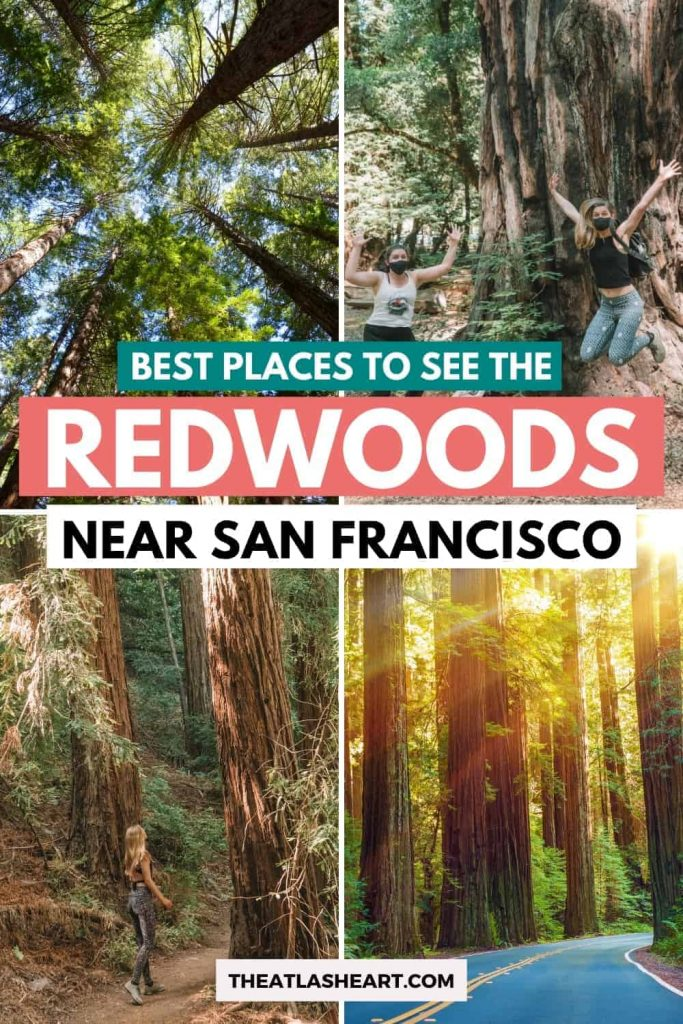 where to see the redwoods near san francisco