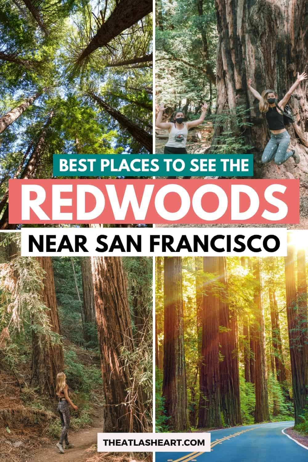 9 Places to See Redwoods Near San Francisco (Local\'s Guide)