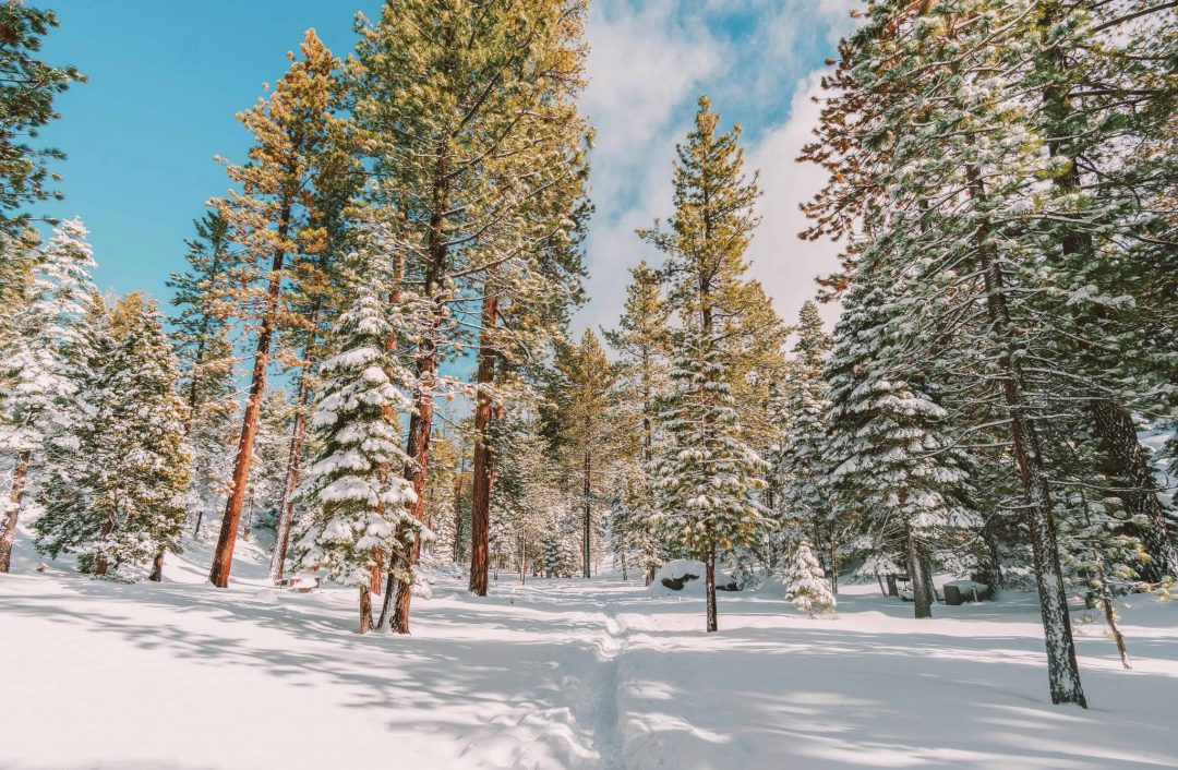 winter actitivies in lake tahoe - cross country skiing