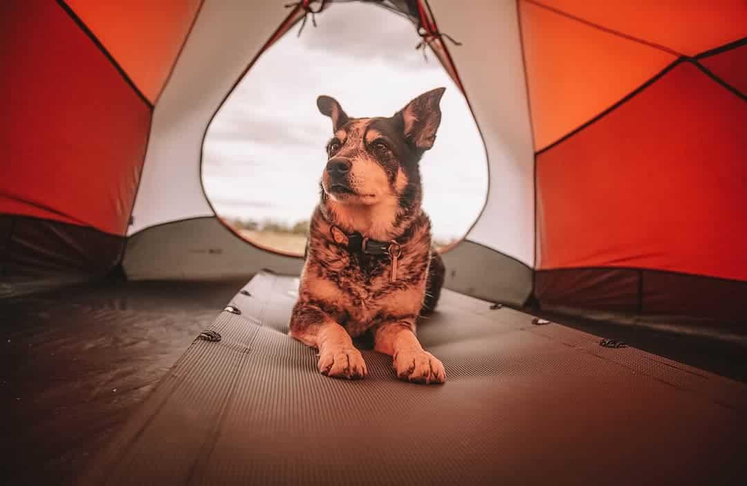 best tent waterproofing methods