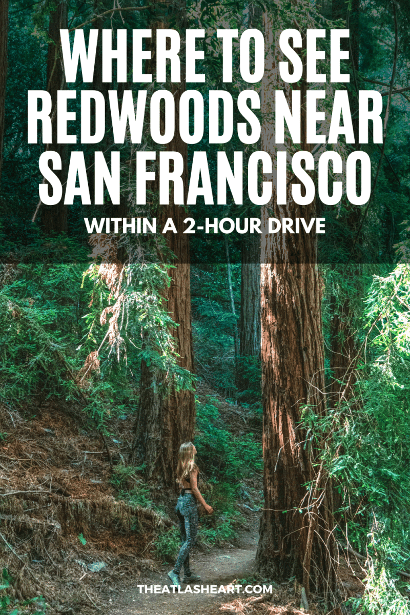 Where to See the Redwoods Near San Francisco Pin 1