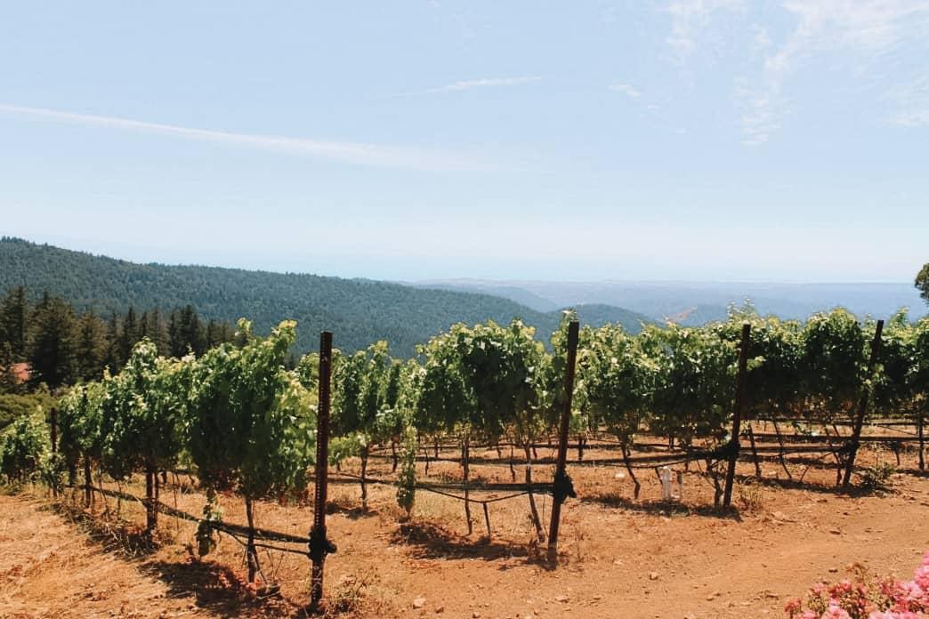 An intro to the Santa Cruz Mountain Wineries