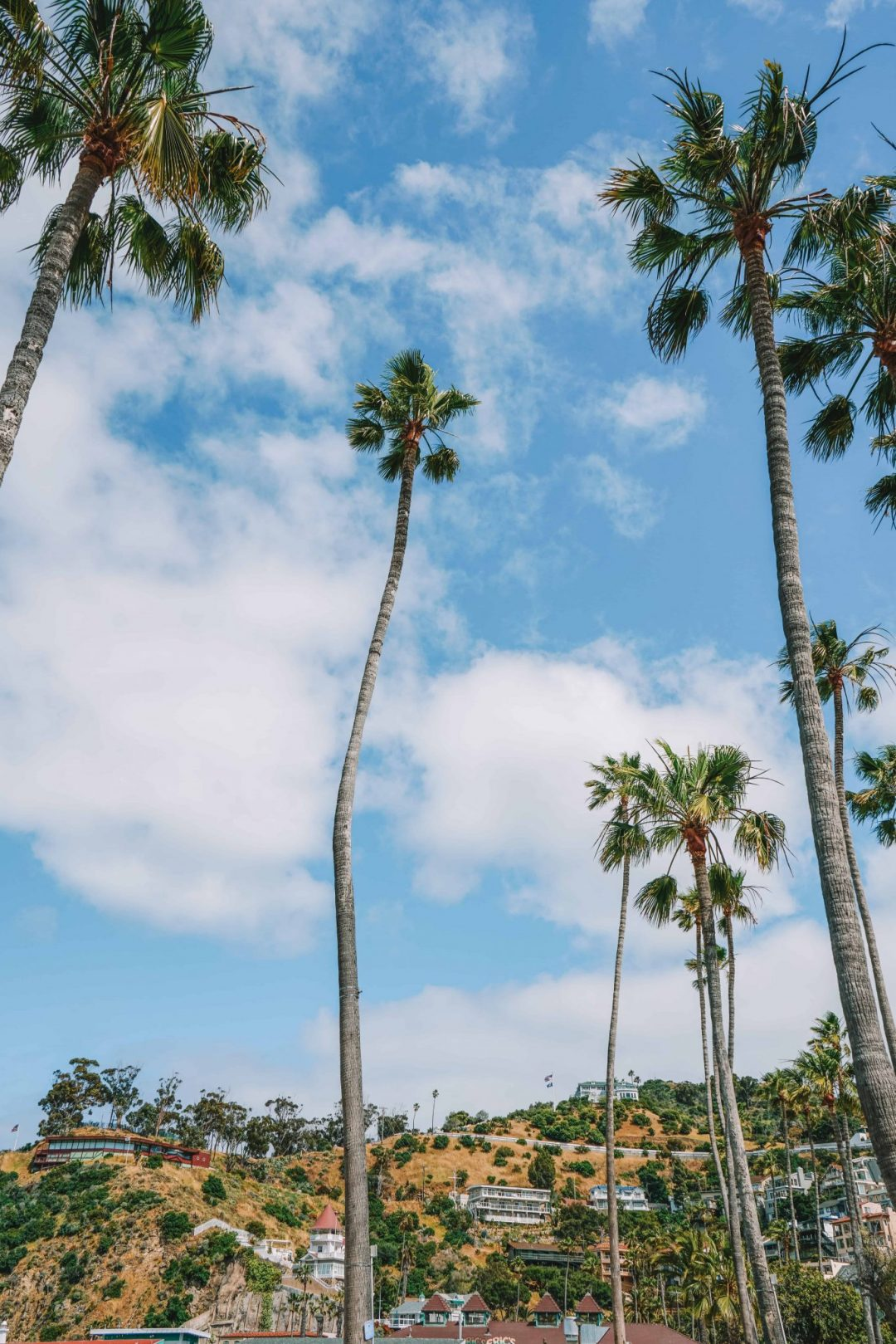 visit catalina island - tips for your trip
