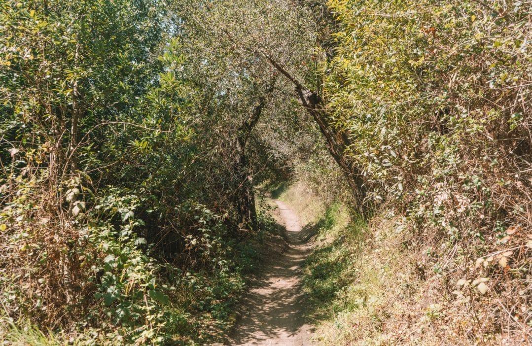 la corona trail - delaveaga park