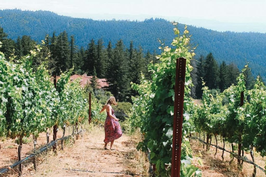 santa cruz wineries