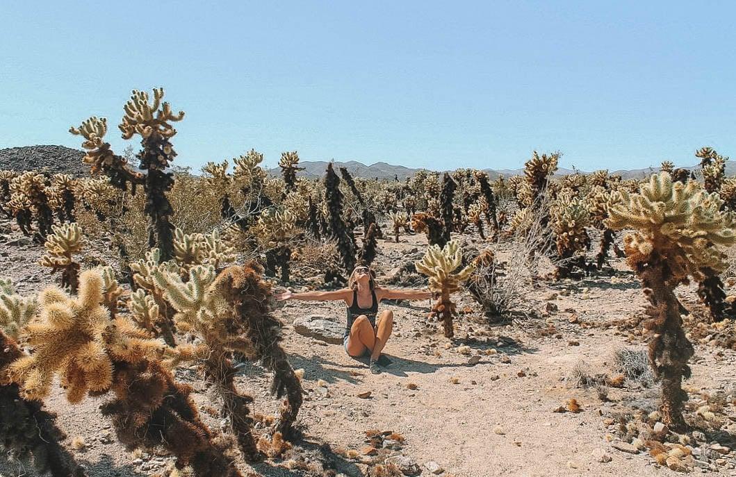 Walk through the Cholla Cactus Garden