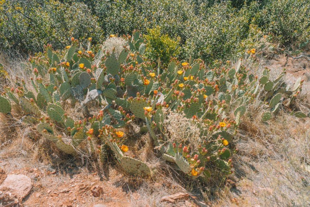 catalina island desert flora