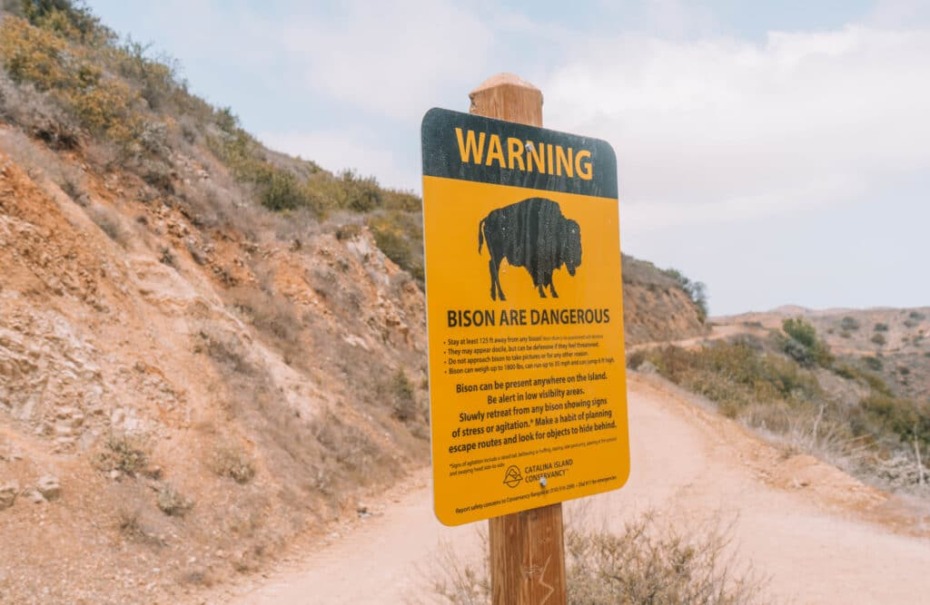 catalina island wildlife, bison sign