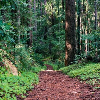 where to see the redwood near San Francisco